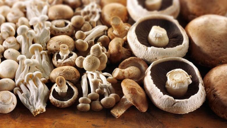 An Array of Mushrooms